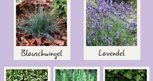 10 Gartenpflanzen für Anfänger