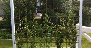 DIY Outdoor-Sichtschutz-Ideen